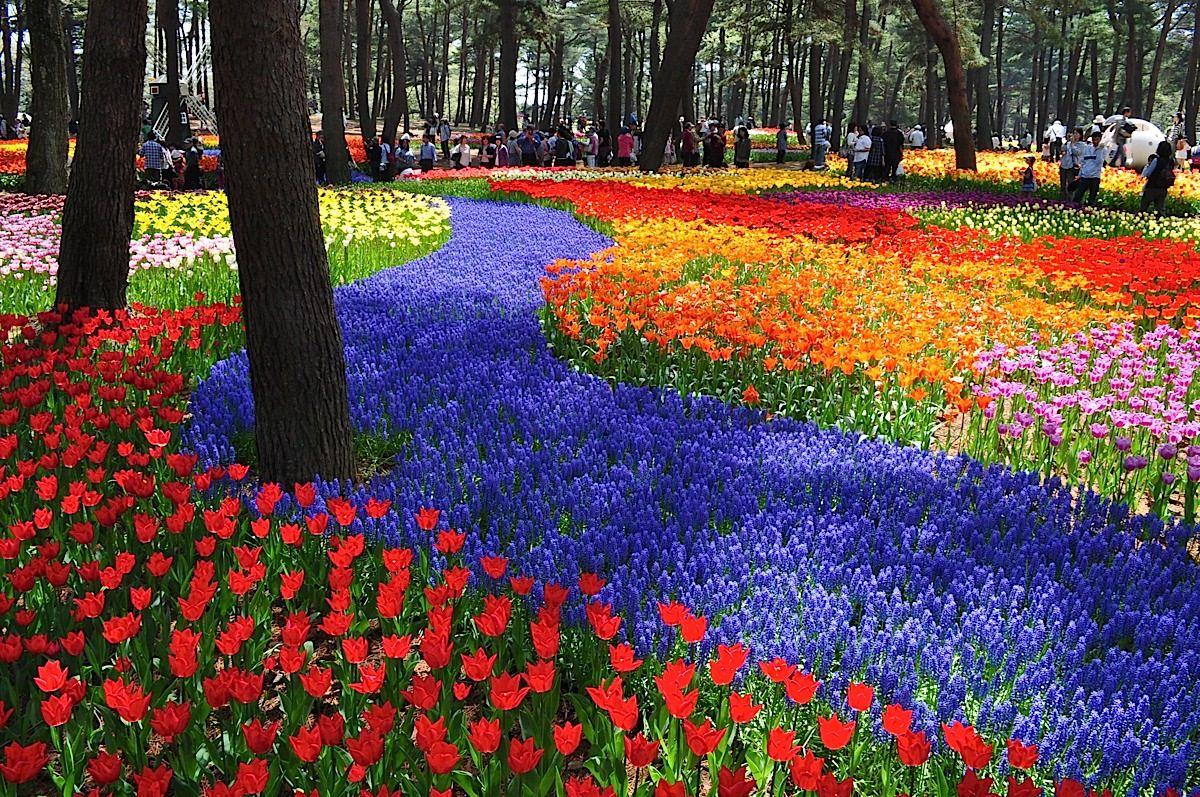 Покажите все цветы мира